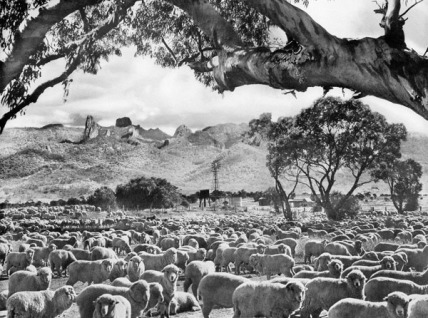 LAND 20thC - © Frank Hurley - 'The Golden Fleece' 1959